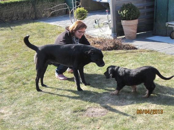erster beidseitig vorsichtiger Kontakt zwischen Nachbarshund Max und Bjarny