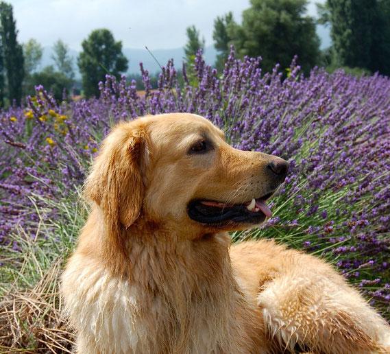Grüße aus dem Lavendelfeld, Frankreich-Urlaub 2014