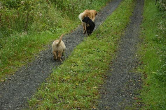 Thaler und Annabelle (vorweg laufend) bleiben zusammen; Amie wird in 3 Tagen ihre eigenen Wege gehen