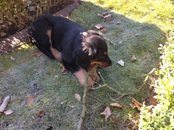 in diesem Garten wird Bera zukünftig einen Teil ihrer Abenteuer erleben...