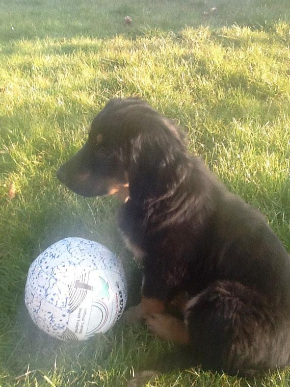 Bastians  Ball