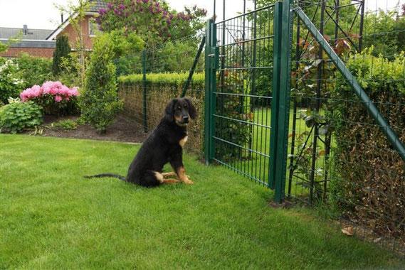 Warten auf den Hundekumpel Max...