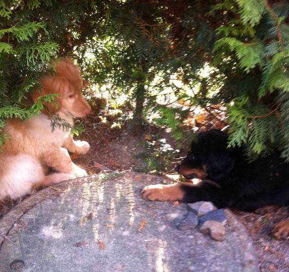 01.04.2013; wir besuchen Baki in seinem neuen zu Hause und stolz zeigt er seinem Bruder Birdy den eigenen Garten