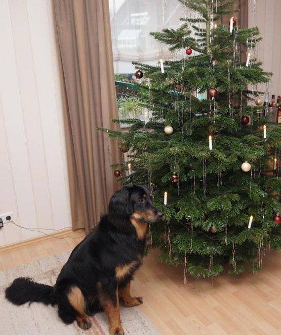 Bjarnys erstes Weihnachten 2013