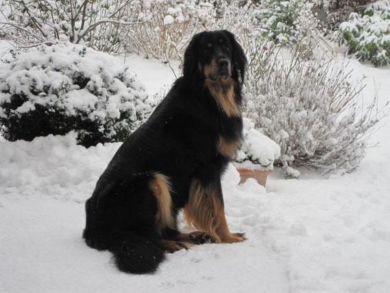 Pünktlich zum 2ten Geburtstag endlich mal wieder Schnee! Happy Birthday Prachtbjarny!!!