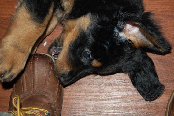 Bera hat den für sie passenden Schuh immer  noch nicht gefunden!