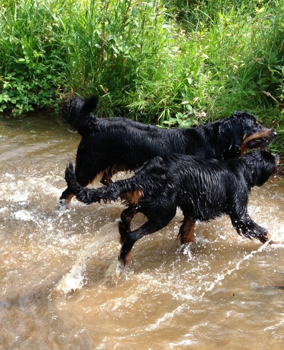 alle Hunde raus aus den Fluten....