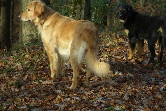 Novemberwald mit Thaler und Annabelle