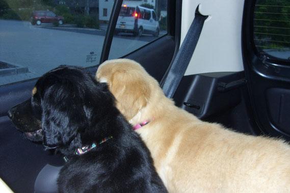 Große weite Welt für Amie und Annabelle aus dem Autofenster