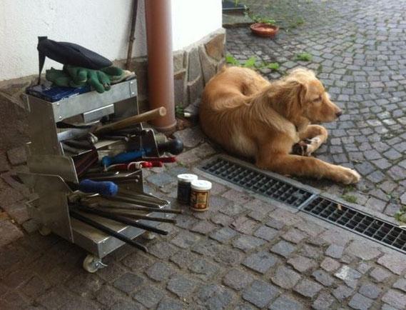 Booker lässt gerne arbeiten, aber ist immer dabei (und mitlerweile auch schon so vernünftig, dass er das Werkzeug da lässt, wo es hingehört)!