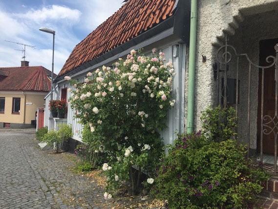 Kopfsteinpflaster und Haus mit Rosen, Sölvesborg, Schweden