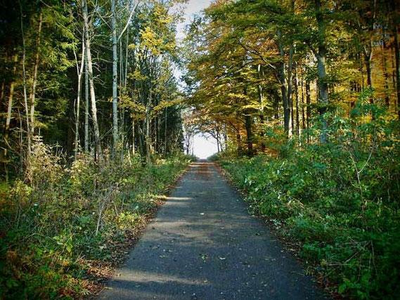 Weg durch Wald in St. Johann Schwäbische Alb