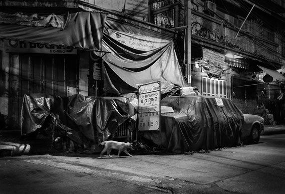 Bild: walking cat, Bangkok, 2013, Ultrachrome K3 Pigmentdruck, Auflage 20 - 54,5 x 74,5 cm, 5 + 2 E.A. 70 x 100 cm, Marc Junghans Fotografie
