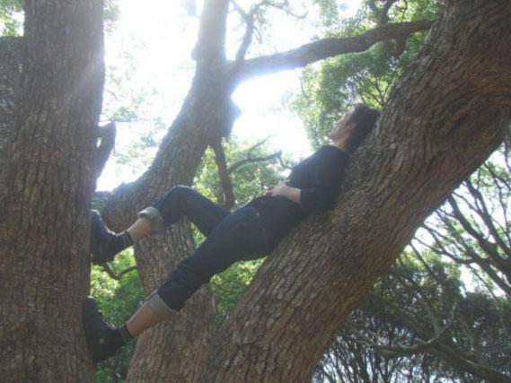 木に登ってみたり。