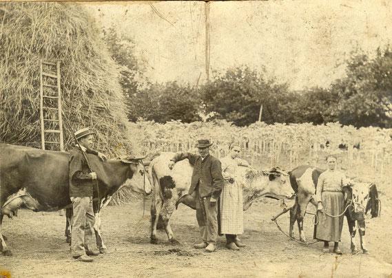 Départ pour le comice agricole : la famille Leblanc de Aussé va présenter ses animaux (vers 1907)