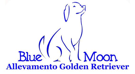 Cuccioli Golden Retriever Allevamento Centro Psicologia Canina Blue Moon
