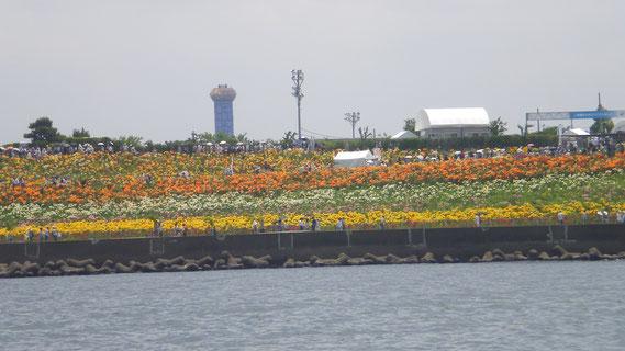 【大阪市舞洲のゆり園をヨットから撮影 2016-06-15】