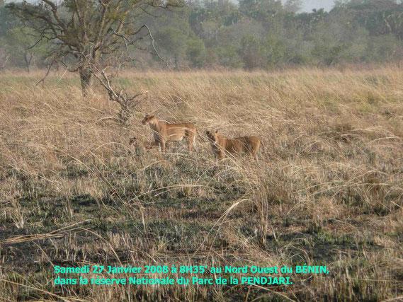 Dimanche 27 Janvier 2008 tôt dans la réserve. 532 KO.