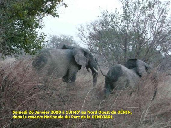 Dans le Parc National de la Pendjari au Bénin.  428 Ko.