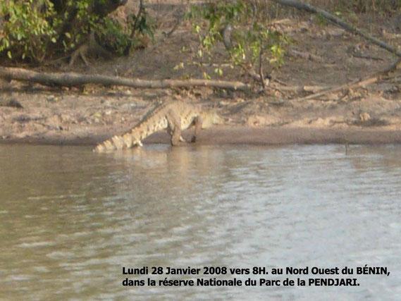 Dans la mare BALI, de nombreux crocodiles, lundi matin vers 8H00. 257 KO.