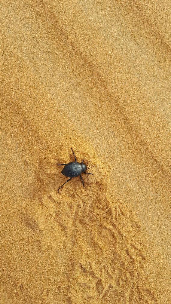 auf Wiedersehen aus der Wüste...Euer...Kameldungkäfer