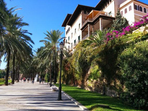 Allee in Palma