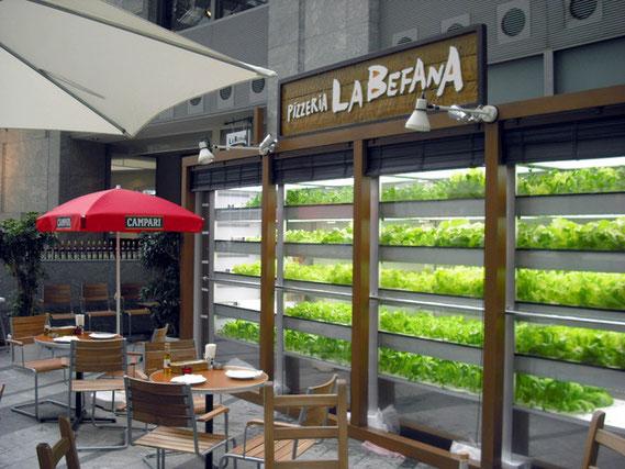 """テラスの野菜工場""""シェフの農園""""で野菜がぐんぐん育っています! : 店内写真 : ラ・ベファーナ 汐留[食べログ"""