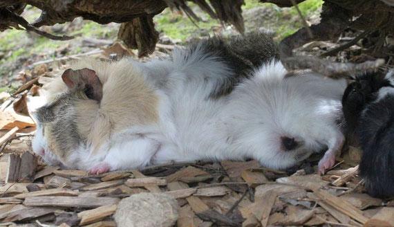 Lotta ist müde