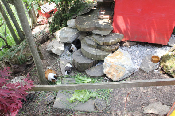 ... die Schildkröten leben auch im Gehege von Batimba