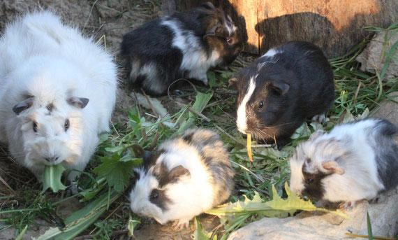 Penelope, Nama, Ernesto, Semora und Paila