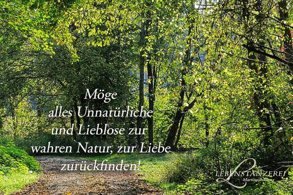 ©Martina Pokorny/Zeit der Wandlung - November 2017