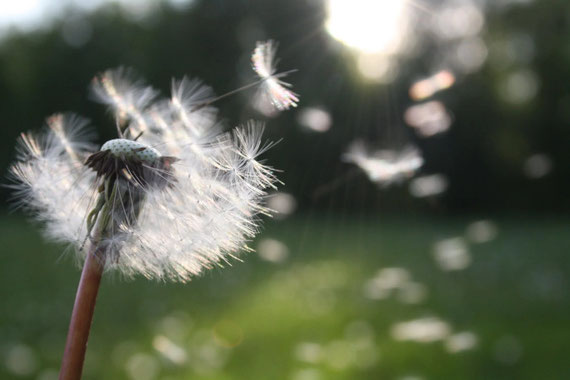 Akupunktur & TCM gegen Heunschnupfen: Blüte im Frühling