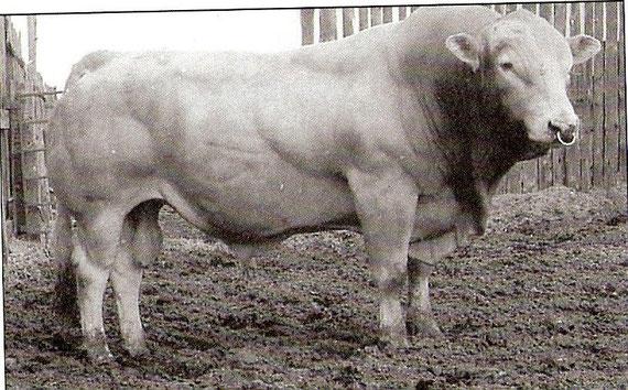 Kenworth ist der Großvater vieler unserer besten Kühe