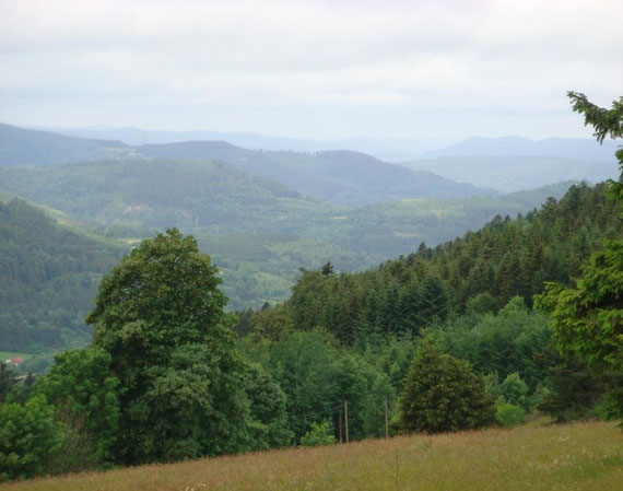 Vosges Country 2011