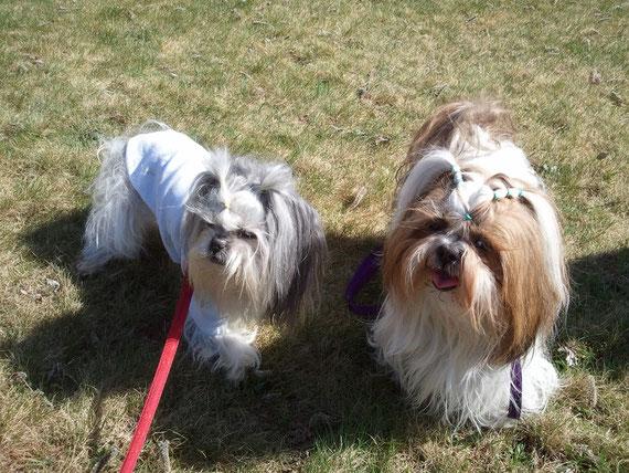 Lily et Bergamote 29 mars 2012