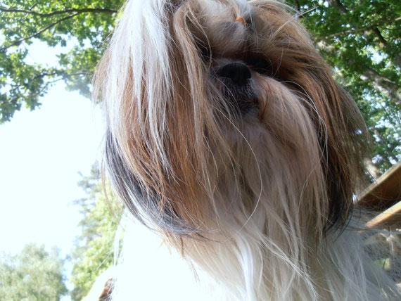 Bergamote mercredi 18 juillet 2012