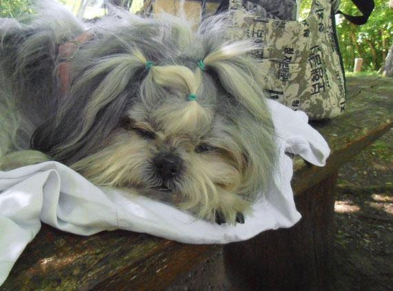 Lily le 26 juin 2012