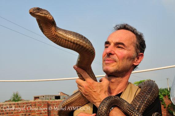 """Avec 眼鏡王蛇 un cobra royal (Ophiophagus hannah) """"apprivoisé"""" en Chine du sud. Voir l'onglet Expéditions..."""