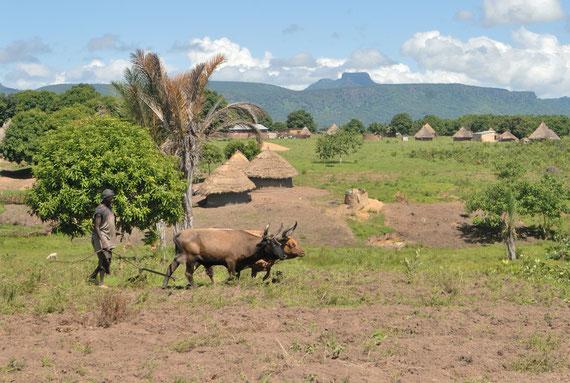 Paysage bucolique à Kérouané en Haute-Guinée @Michel AYMERICH
