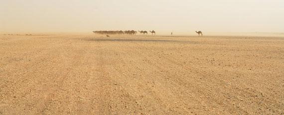 Des dromadaires se rendent par vent de sable vers un puit ©Michel Aymerich