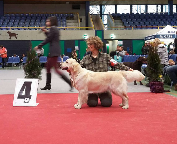 4°EXC  XSMAS Retriever Show OLTEN (CH) 18.12.2016 Judge Susanna Zubair (UK)
