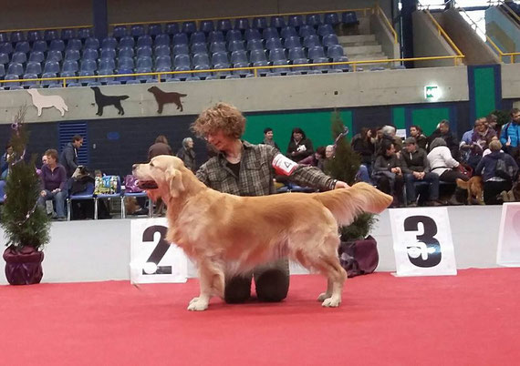 2°EXC RES CAC -  XSMAS Retriever Show OLTEN (CH) 18.12.2016 Judge Susanna Zubair (UK)