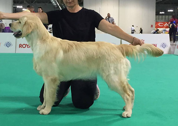 Irene 7 mesi  International Dog Show Milano 2018