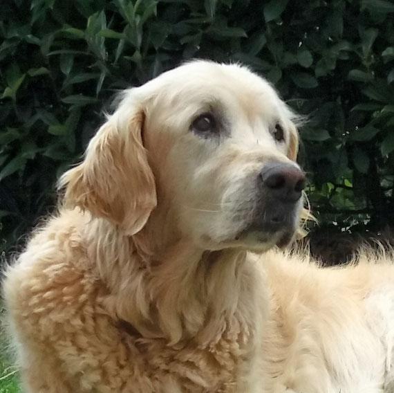 Kuki 14 anni