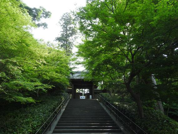 円覚寺総門(端鹿山) 6月