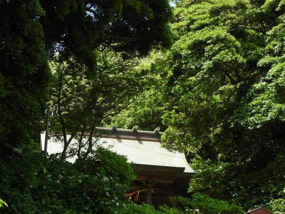 初夏の若葉に包まれる神社
