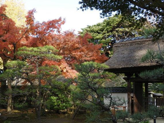 境内からみる、紅葉の山門