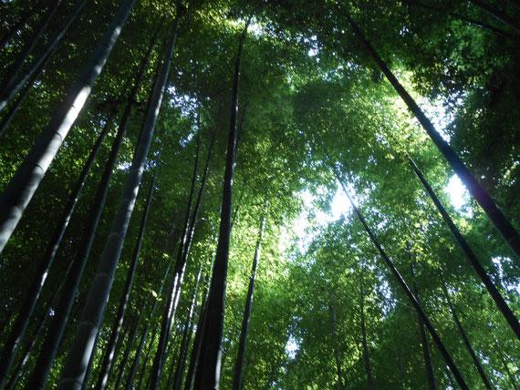 英勝寺奥の竹林