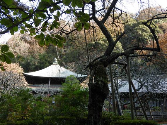 境内からみる瑞泉寺本堂