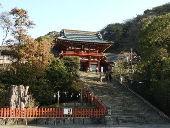 大銀杏と本宮石段